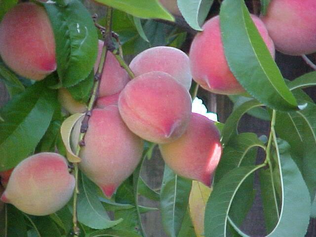 Thưởng thức những trái ngon từ núi rừng Tây Bắc