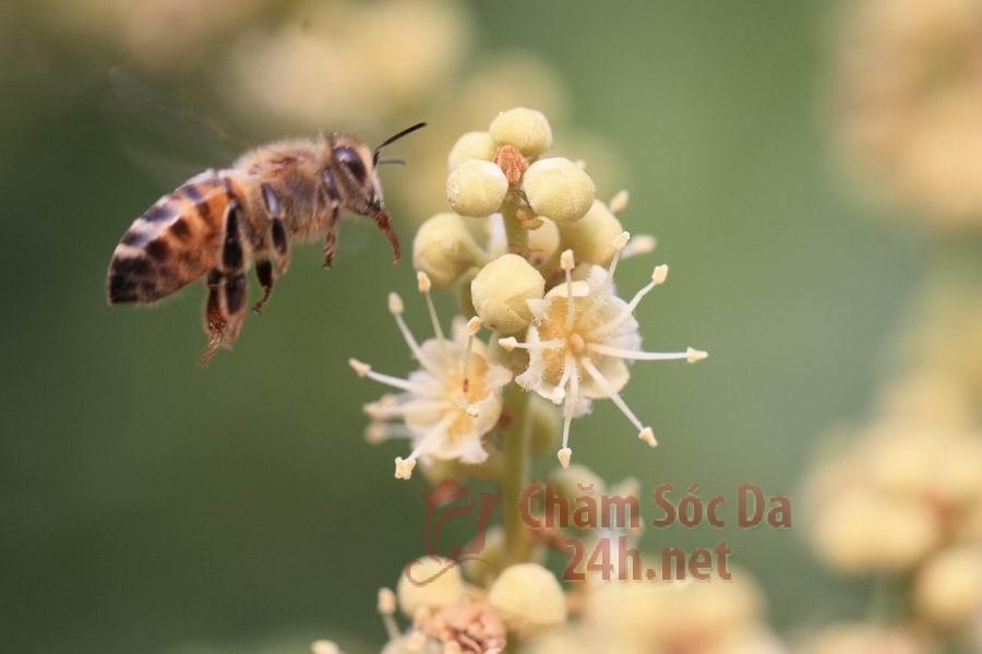 mat-ong-hoa-nhan-hung-yen-bee