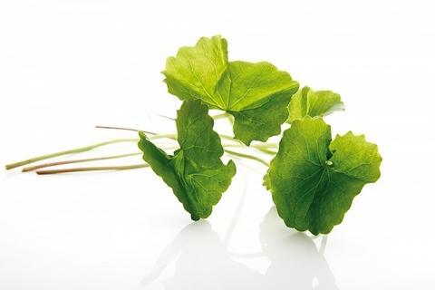 Đẹp da và trị mụn từ rau má