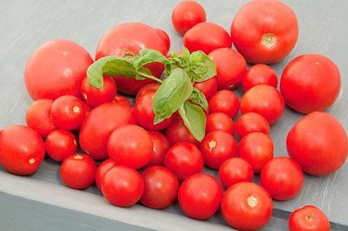 Làm đẹp da và trị mụn từ cà chua