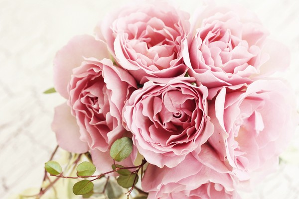 Đẹp như hoa nhờ dưỡng da bằng hoa hồng, hoa cúc 4