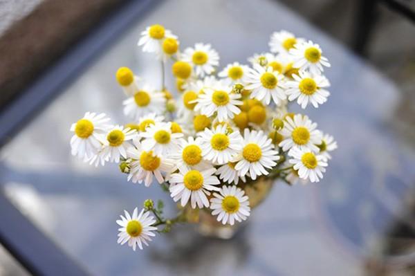 Đẹp như hoa nhờ dưỡng da bằng hoa hồng, hoa cúc 5